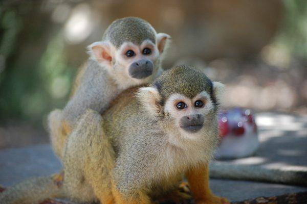 פארק הקופים צילום מתן פיליזר